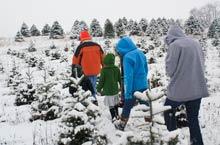 Christmas Tree Farms In Wv